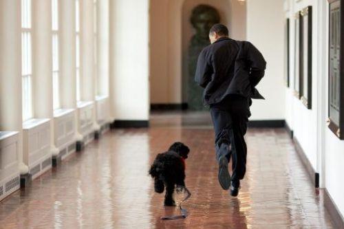 Perro de obama
